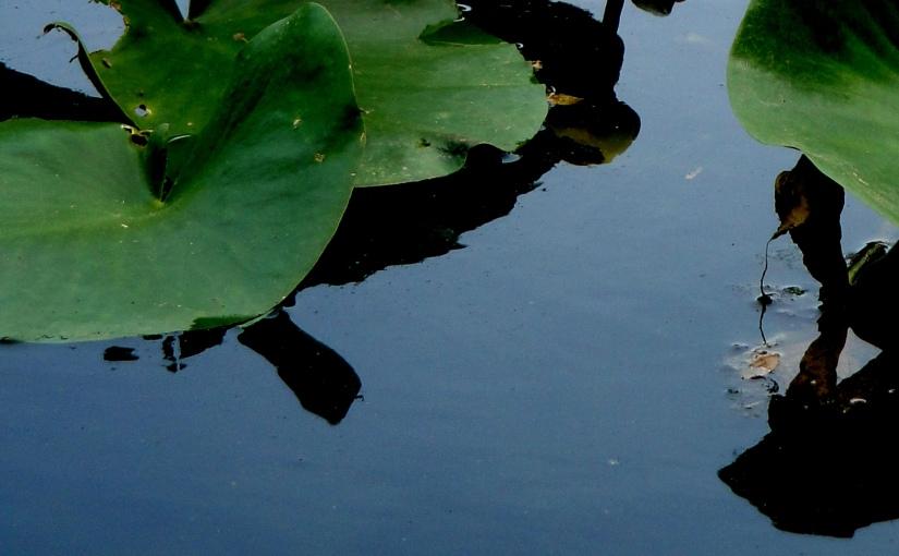 Goodnight Pond